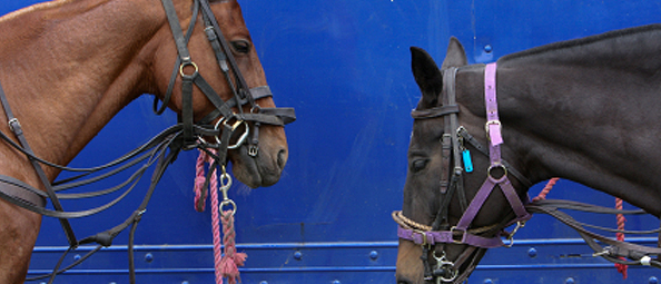 horse transport UK