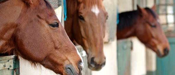 Horse Transport UK | Register your horse transport business